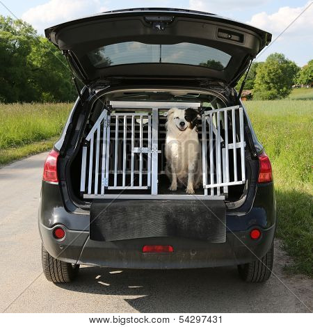 Dog pet sitting in a car trunk and wants to travel poster