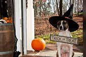 A cute dog trick or treating on Halloween poster