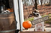 A cute dog trick or treating on Halloween. poster