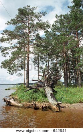Pine Cape