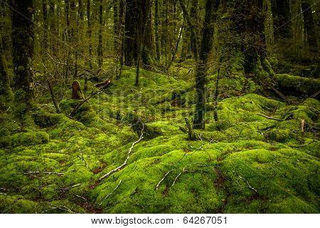 New Zealand rainforest