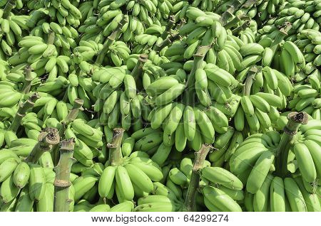 Pile Of Unripe Banana Called Kluay Khai