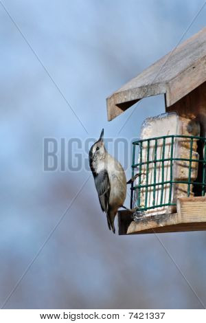 Nuthatch Dining