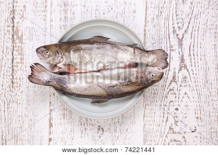 fresh trout in the plate