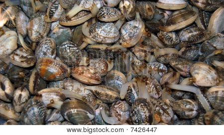 Heap of mollusks under water. Close up. poster