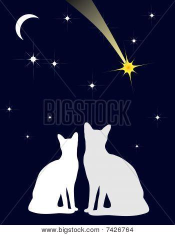 Romantic date in the moonlight