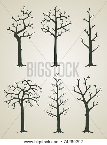 Vector illustration of trees without leaves