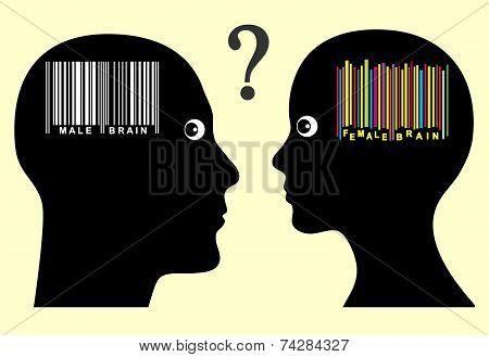 Male And Female Brain