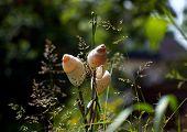 Snail shells on a stick in a garden. poster