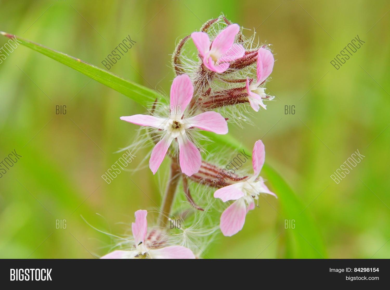 Pink Wild Spring Flowers Image Photo Bigstock