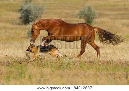 Horse and dog run