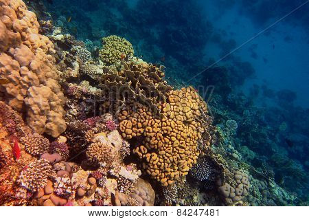 Colorful Coral In The Sea