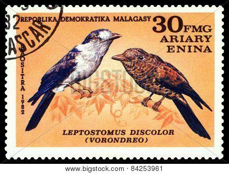 Vintage  Postage Stamp. Bird Leptostomus Discolor.