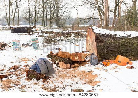 Snow landscape with tree trunks and work gear