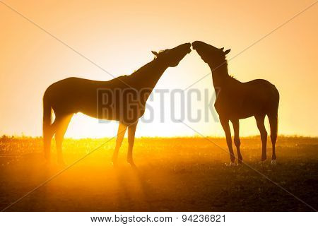 Two horse in love at the morning