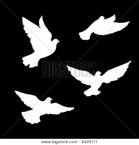 Four pigeons silhouettes