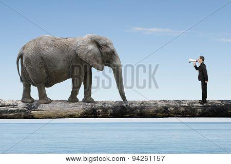 Businessman Using Speaker Yelling At Elephant On Single Wooden Bridge