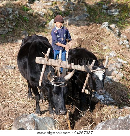Little Unidentified Boy Hard Working In Agriculture