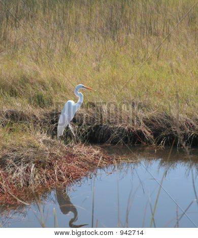 Egret By The Water.