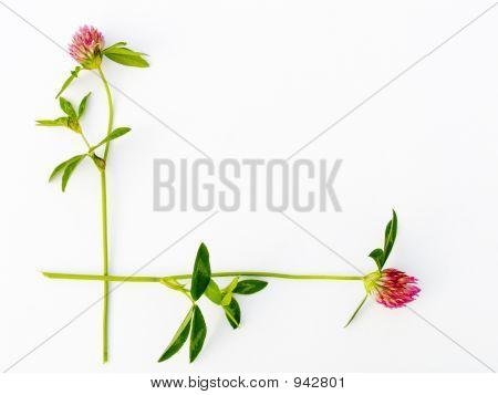 Flower Framework
