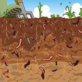Editable vector illustration of earthworms in garden soil poster