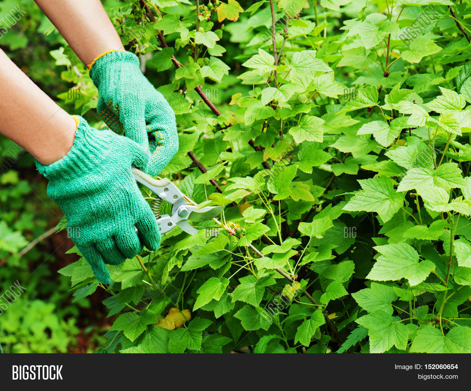 Hands garden pruner garden image photo bigstock for Big hands for gardening