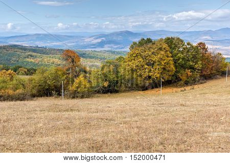 Panorama with yellow trees of Cherna Gora mountain, Pernik Region, Bulgaria