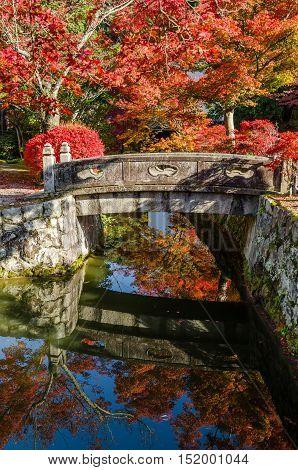 Autumn leaf in Kiyomizu-dera temple in Kyoto, Japan