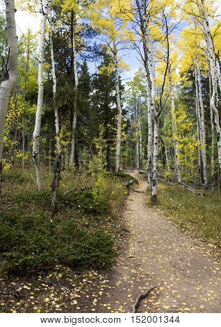 Dirt path on the Colorado Trail in the fall