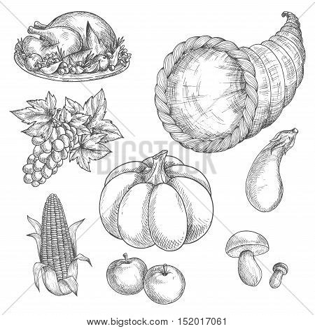 Thanksgiving day icons. Vector sketch isolated roasted turkey dish on plate, cornucopia with vegetables and fruits harvest of grape bunch, pumpkin gourd, corn, eggplant, mushrooms, apples