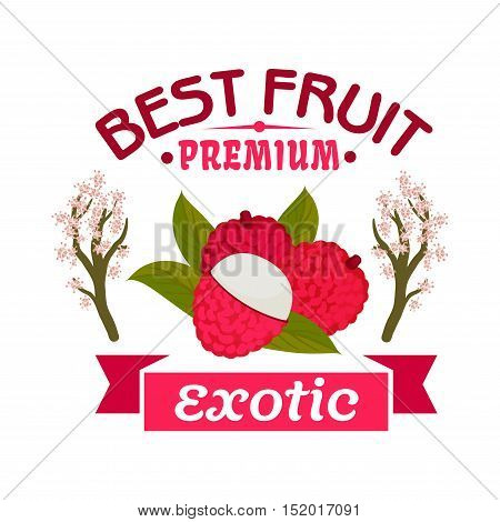 Exotic lychee fruit emblem of tropical ripe litchi with green leaves, framed by blooming lichee trees and pink ribbon banner. Farm market, food and juice packaging design