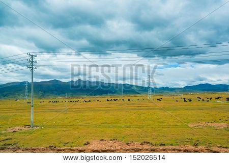 The China Inner Mongolia natural grassland, China.