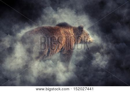 Brown Bear In Smoke