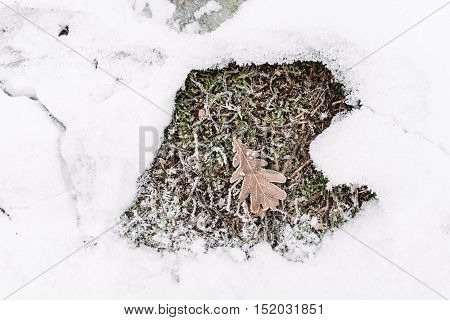 Oak leaf on grass in snow frame, flat lay, free space. Dry folio in frost surrounding. Piece of autumn in winter