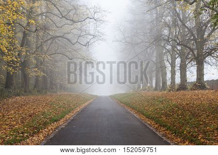 Autumn or Fall tree lined empty road leading into mist or fog