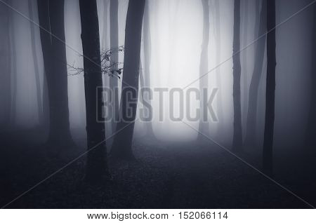 Haunted forest with thick fog on Halloween