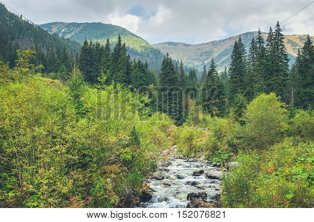Summer mountain landscape. Mountain stream in the forest scenery with peaks in the background.