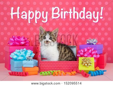 Grey and white tabby kitten pink polka dot birthday party celebrations kitten in box surrounded by colorful presents with bows and party hats behind. Pink polka dot background. Happy Birthday text