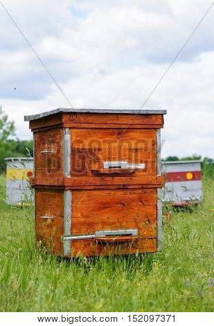 Hives of bees in the apiary, Apiculture beekeeping