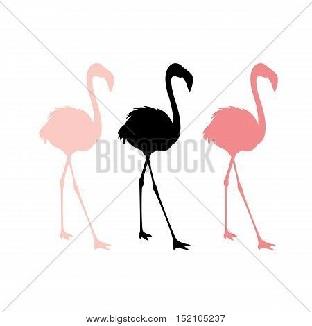 Pink flamingos vector illustration  set silhouette black