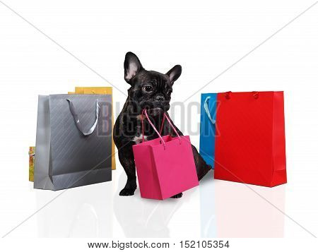 Cute dog holding in teeth a bag for purchases. Many multi-colored bags around the dog. White background. The concept of the sale purchase pet products