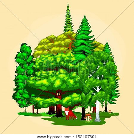 Cartoon vector set trees outdoor park. Outdoor trees in the park with branch, leafs. Wild forest plants animals.Pine Tree with branch leafs in wild forest outdoors. Isolated ecology natural wood.