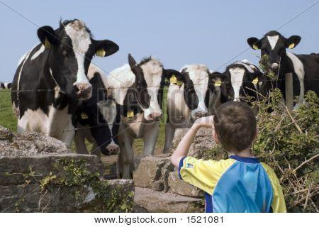 Boy Meets Cow