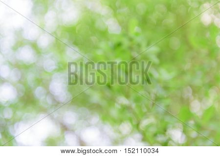 Close up abstract natural Bokeh blurred bokeh.