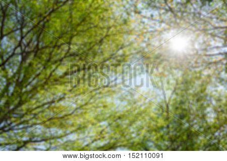 Blur beautiful trees and sun light ,Blur trees