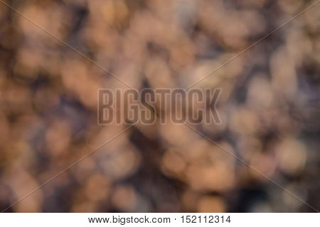 Abstract bokeh brown grass  background ,sunny ,Abstract