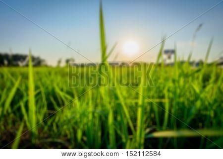 blur vintage grass and sun