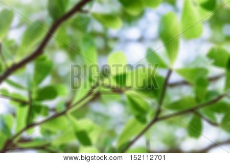 Blurry dry leaf set isolated on white backgroud