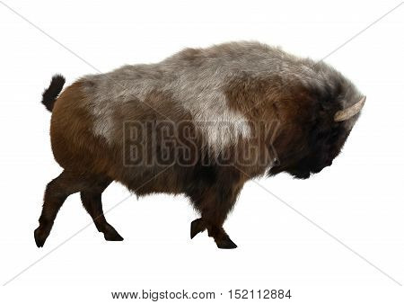 3D Rendering American Bison On White