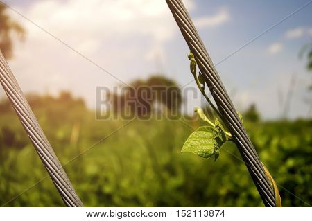 green young creeping plant climber under sunlight with beautiful bokeh background light backdrop